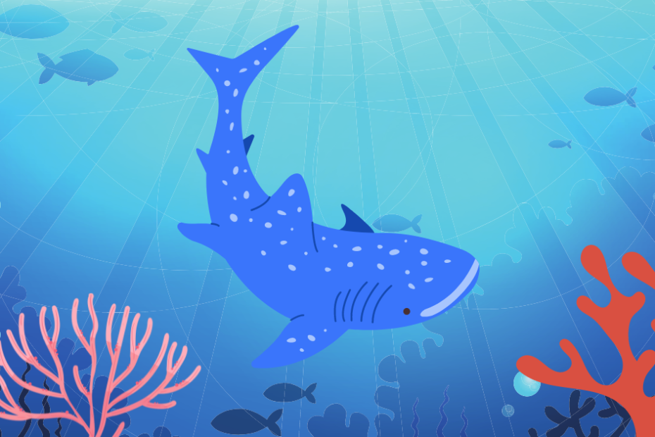 why are whale sharks endangered